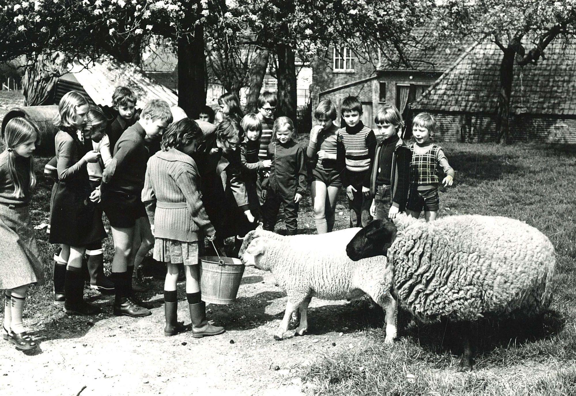 Kinderboerderij Van Clé in Marke