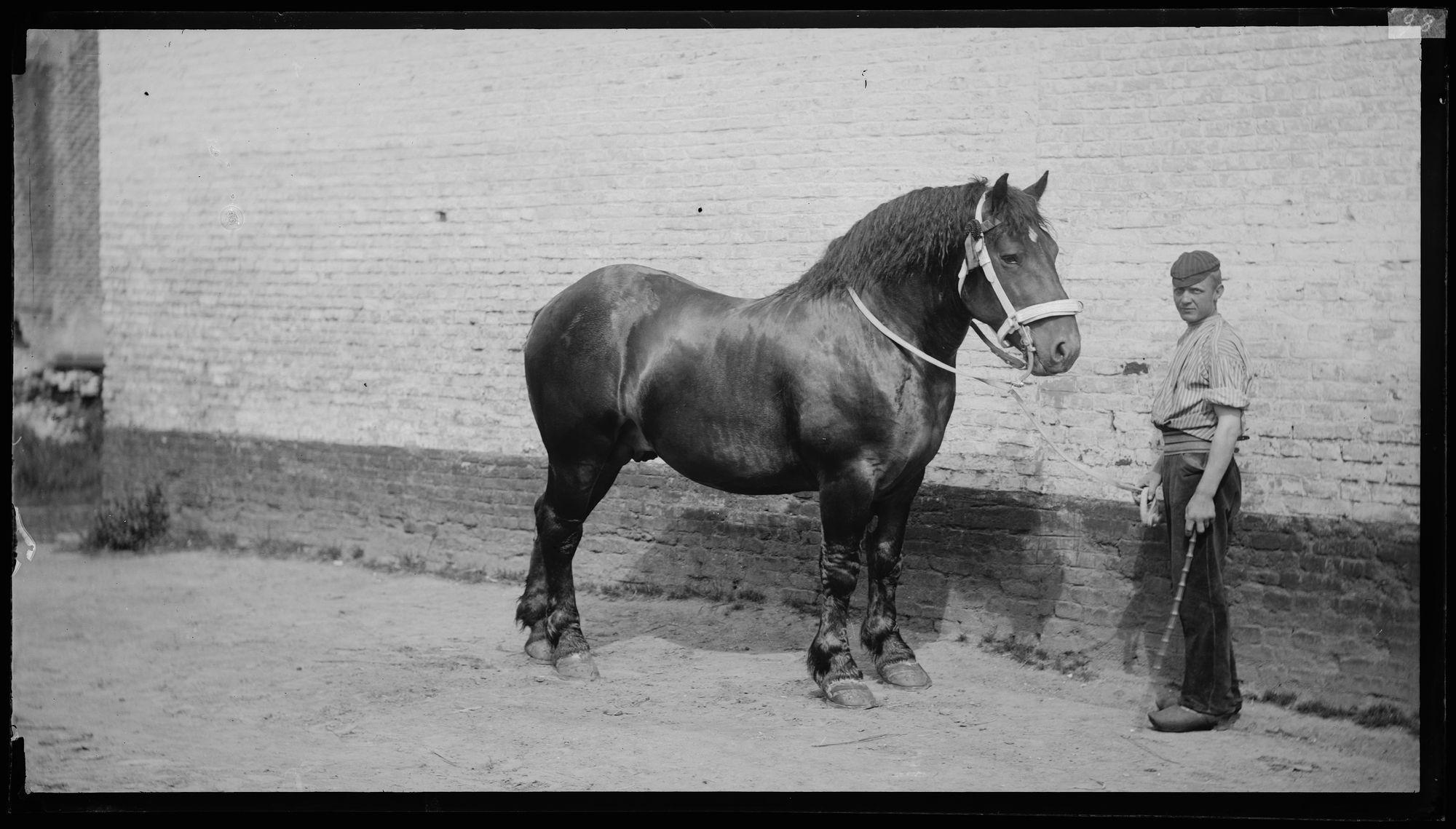 Portret van man met paard
