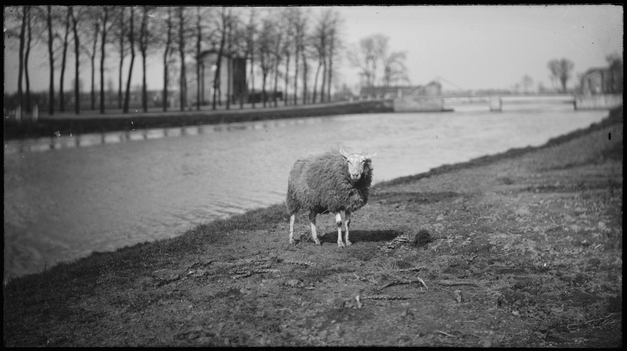 Schaap in landschap