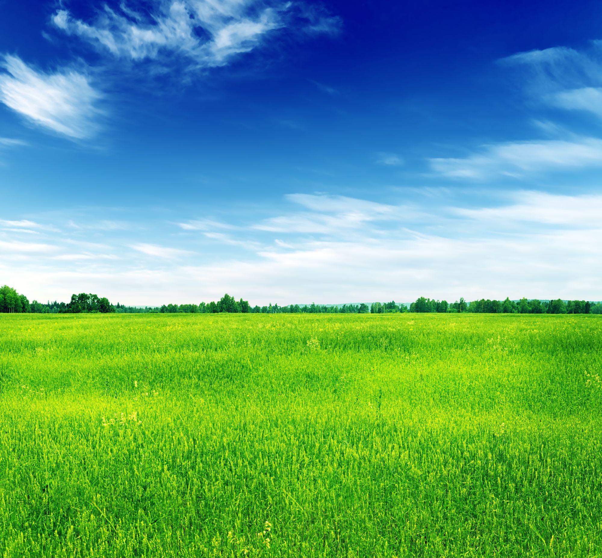 Uitzicht op groen gras