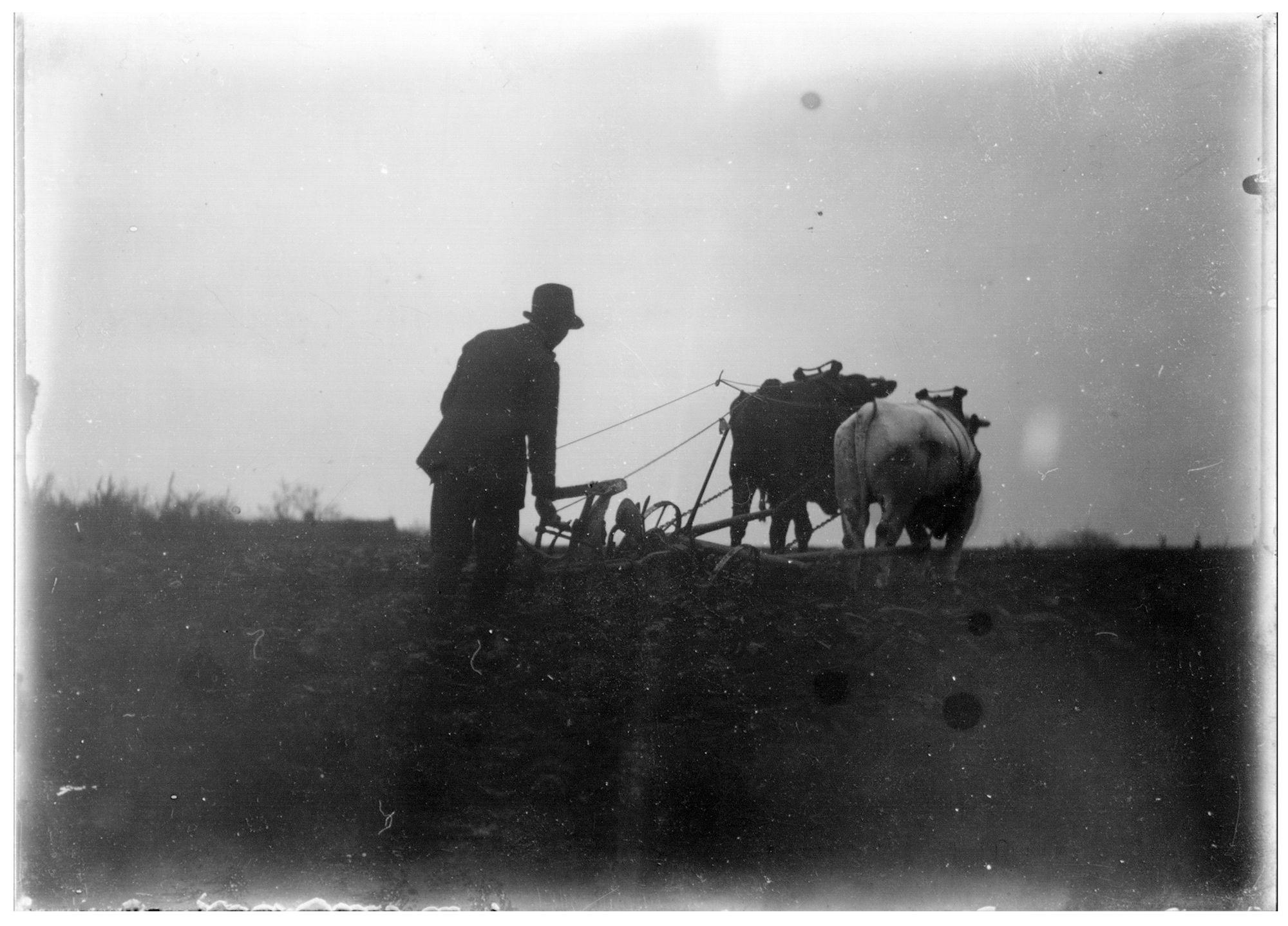 Westflandrica - Boer die ploegt