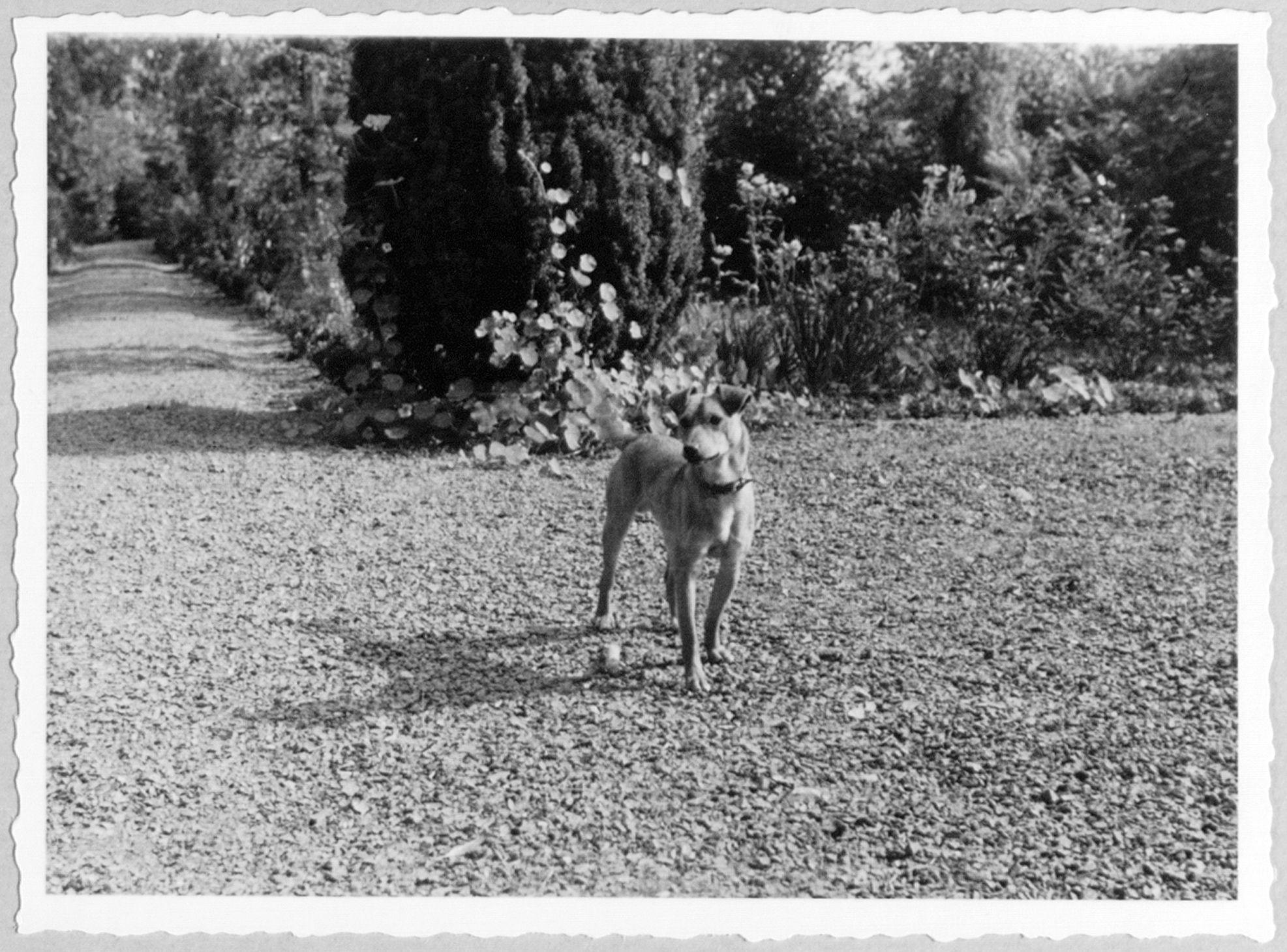 Westflandrica - Patten, de hond van Stijn Streuvels