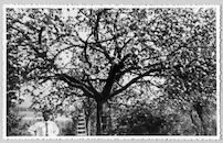 Westflandrica - de tuin van het Lijsternest