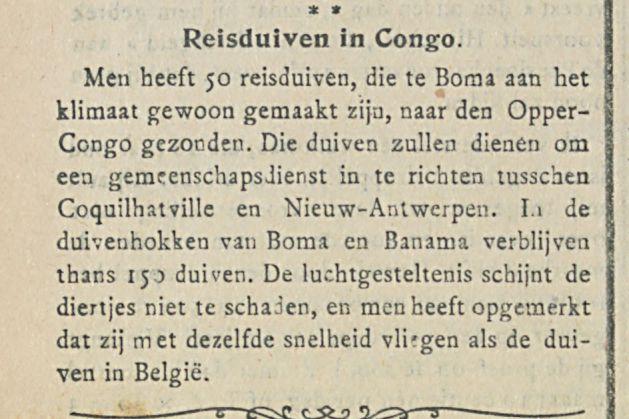 Reisduiven in Congo