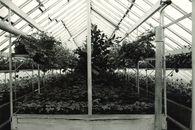 Kweekserre Stedelijke Plantsoendienst
