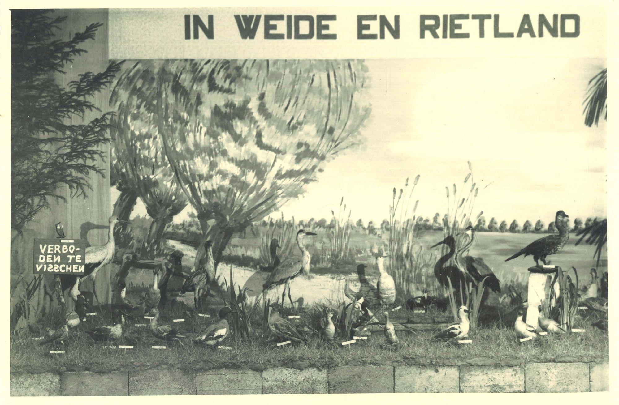 """Vogeltentoonstelling """"De Wielewaal"""" in de Broederschool Overleie"""