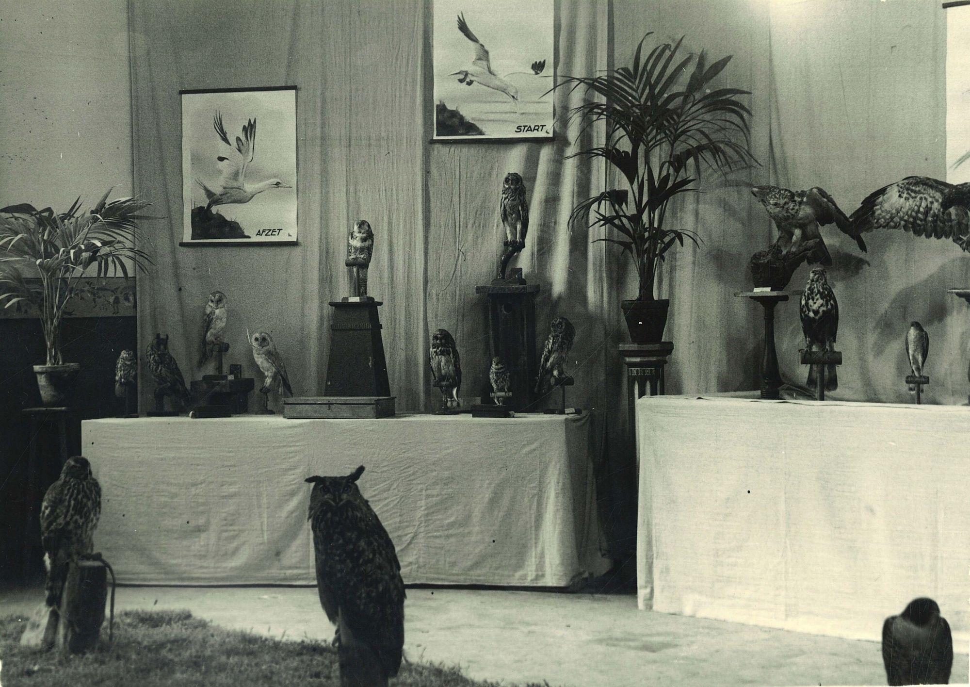 Tentoonstelling van roofvogels in de Broederschool Overleie
