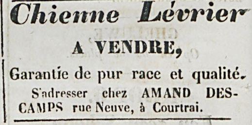 Chienne Levrier